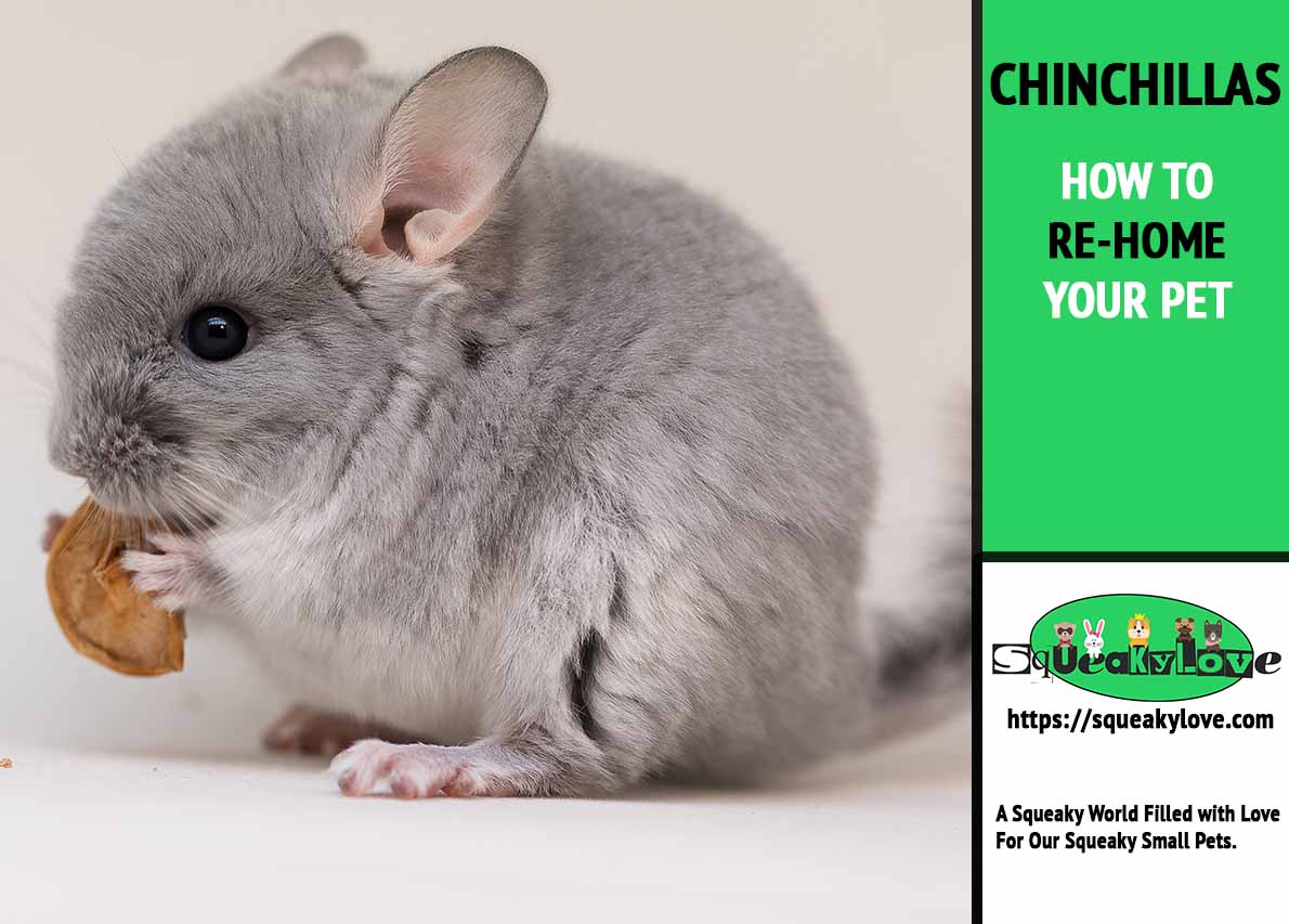 HOW TO RE-HOME YOUR Chinchilla