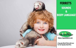 ferret sounds and body language