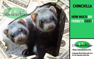 how much do ferrets new cost